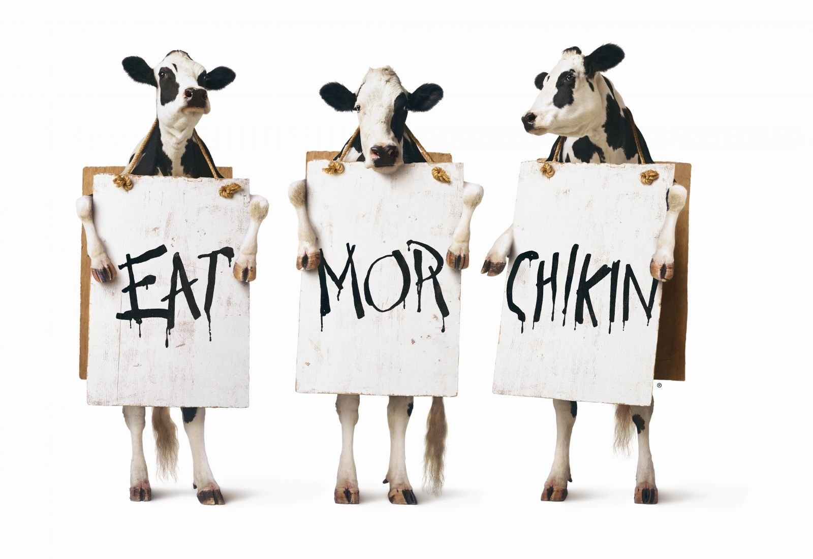 Example: Cows from Chick-Fil-A