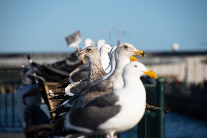 seagulls in a row with one bird looking other direction