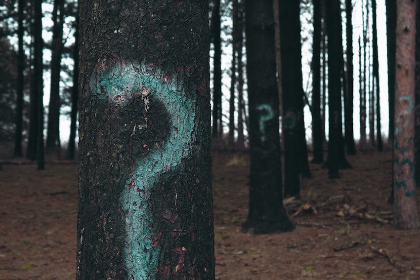 trees with question marks painted on them