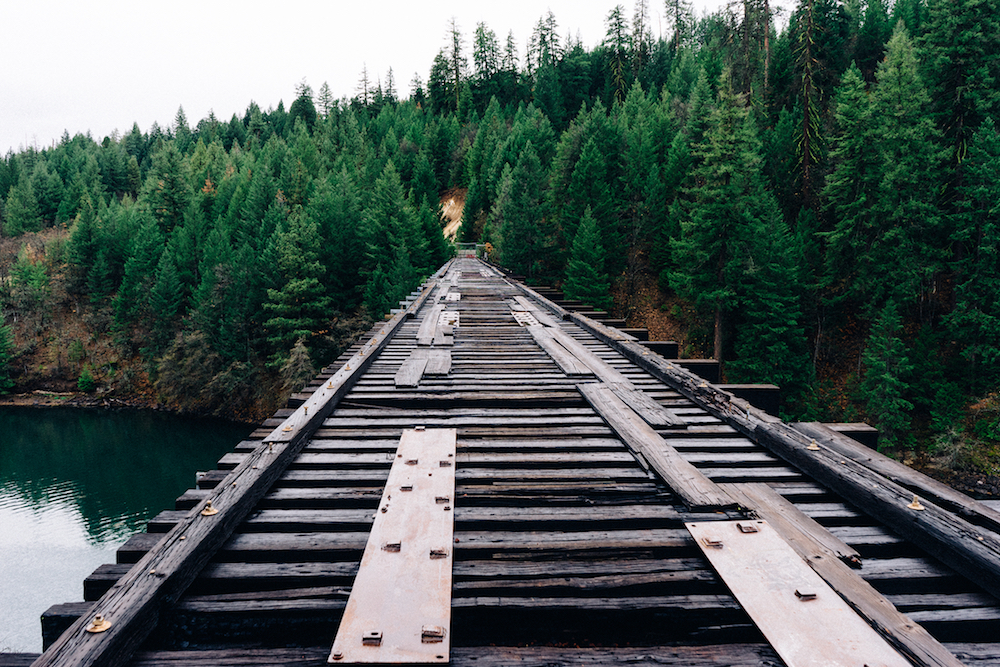 wooden bridge leading to evergreen forest